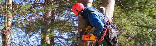 Usluge visinski radovi - orezivanje krošnji drveća
